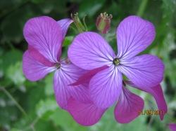 cvijeće 3 052