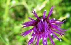 cvijece-5-003