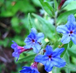 cvijece-5-015