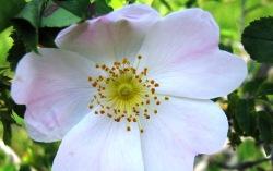 cvijeće 5 010
