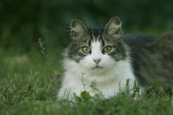 kako mačke pokazuju ljubav