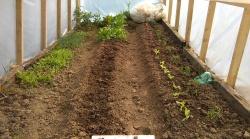 mali plastenik...oskoro stiže veliki staklenik u kojem će se uzgajati punooo biljčica :-)