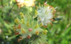 cvijece-5-005