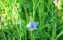 cvijece-5-008