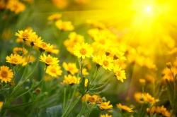 cvjetna-terapija