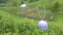 polako niču biljčice i zeleni se :-)